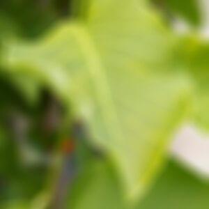 drakes-7-dees-garden-center-16-blur