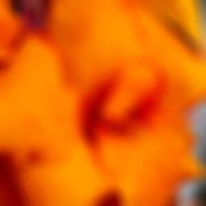drakes-7-dees-garden-center-23-blur