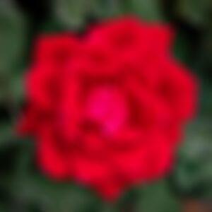 drakes-7-dees-garden-center-25-blur