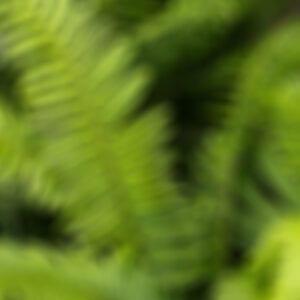 drakes-7-dees-garden-center-5-blur