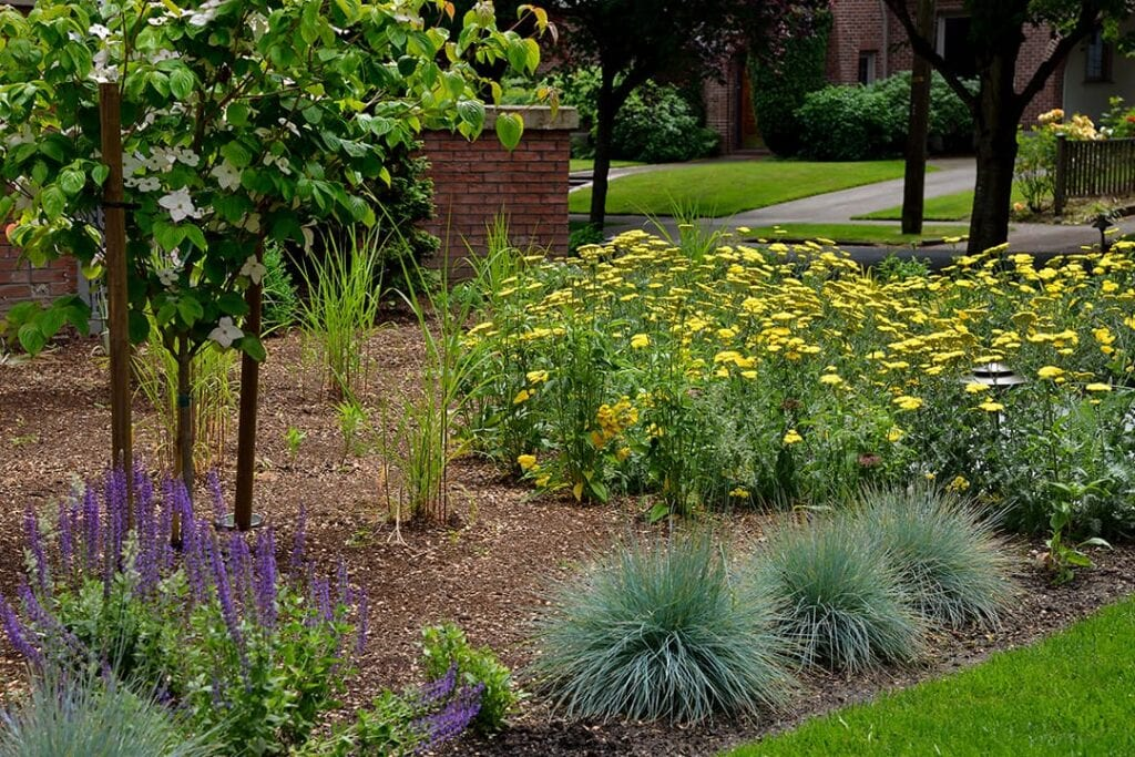 yellow and purple planting flowers in a landscape design project