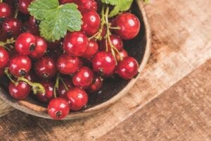how-to-grow-currants