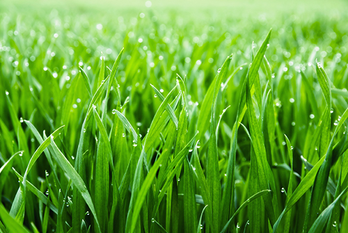 the best lawn soil for grass