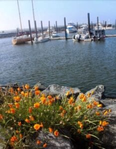 california poppies look beautiful on this waterfront property