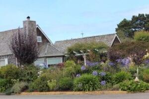 Bergenia, Agapanthus, Sedums, Zauschneria, Cistus beach coastal garden living