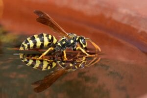 controlling-wasps