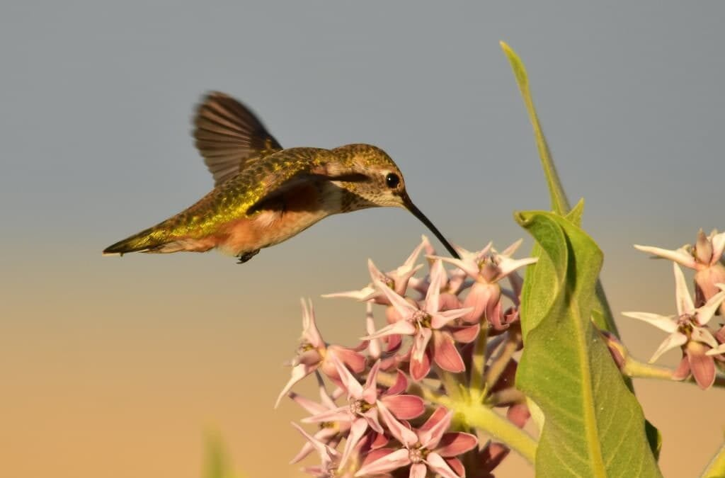How to Attract Hummingbirds and Butterflies to Your Garden