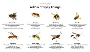 wasp vs bee comparison chart