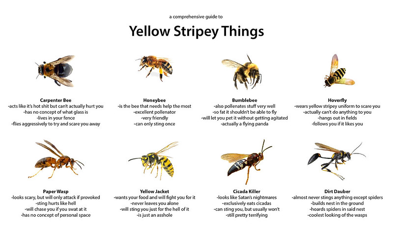wasp vs bee comparison chart