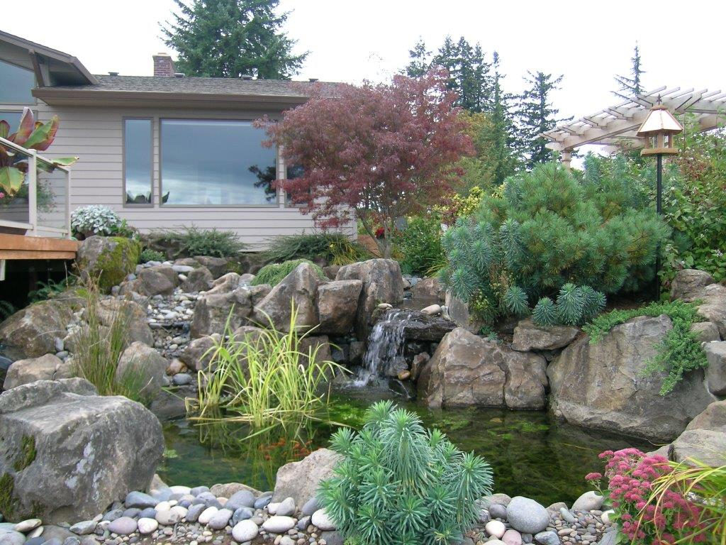 Image of a Rainier Backyard Pond Design and Construction by Drake's 7 Dees