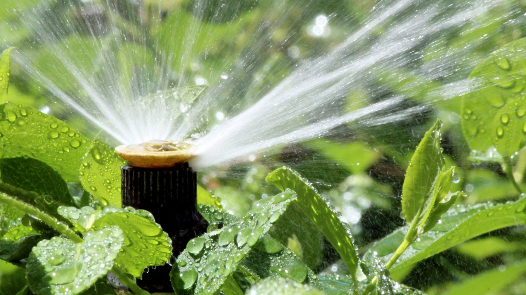 Image for Scappoose Sprinkler System Repair
