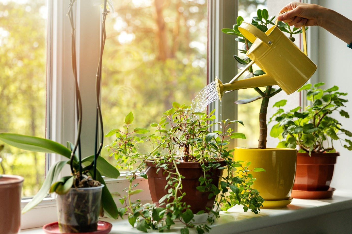 Image of houseplants in a room