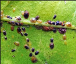 Scale are a pest to indoor plants